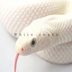 """【衝撃】"""" 白い蛇 """" の夢を見たら人生変わったw!"""